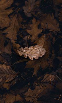 Blatt mit Regentropfen von Anna Davis