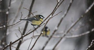 Two birds van