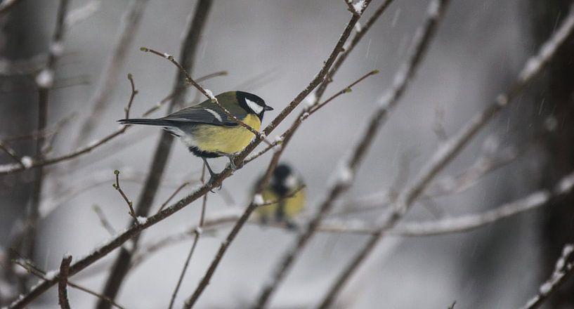 Two birds van Mark Zanderink