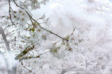 White Blossom von Nanda Bussers