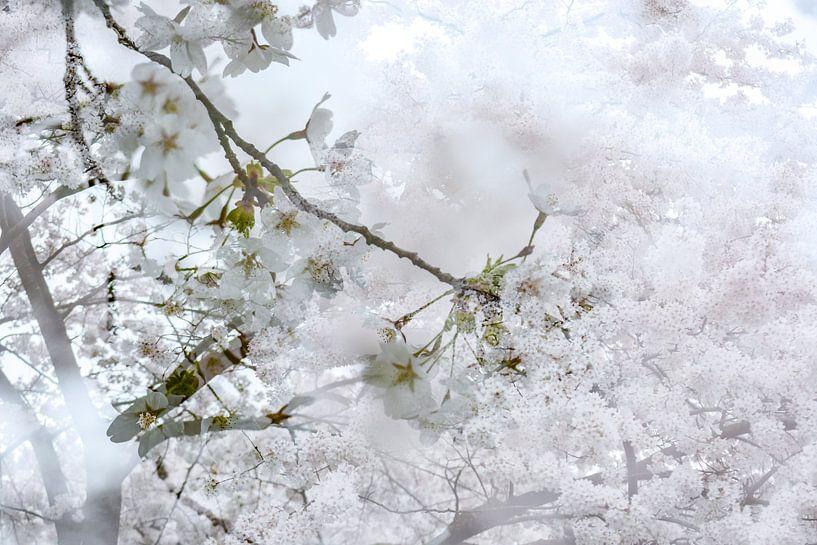 White Blossom van Nanda Bussers