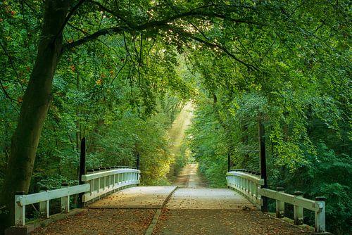 Bridge to Bliss