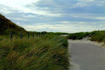 De duinen van Isabel van Esch
