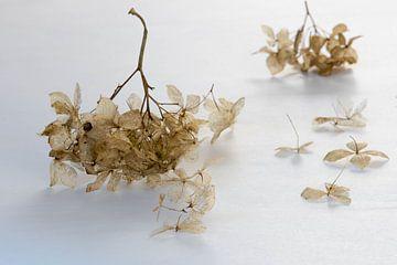 Blumen in weißer und brauner Pastellfarbe von Nancy Lamers