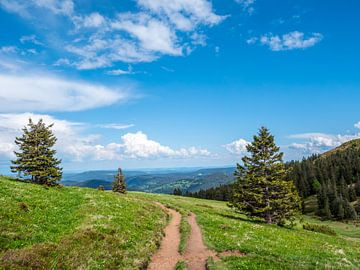 Blick vom Feldberg im Schwarzwald von Animaflora PicsStock