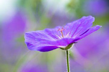 Magnifique nerprun d'Eurasie (fleur) avec un fond doux. sur GiPanini