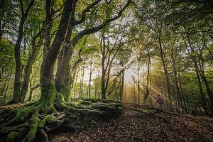 Boom in het Speulderbos