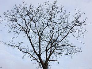 takken van de kastanjeboom