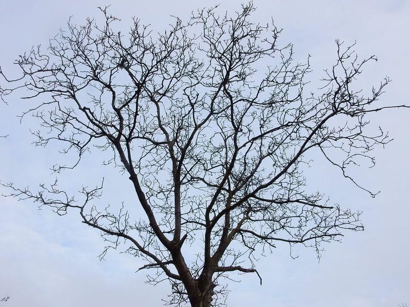 takken van de kastanjeboom van Joke te Grotenhuis