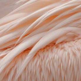 Vleugels roze pelikaan van Margreet Frowijn