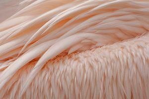 Vleugels roze pelikaan van