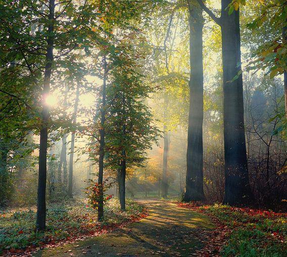 Magisch licht in Amelisweerd