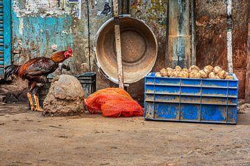 Le coq et les pommes de terre sur Leonie Broekstra