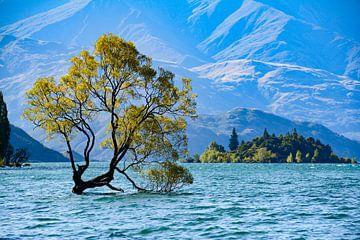 Wanaka-Baum von Ton de Koning