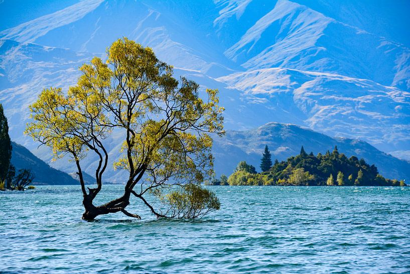 Wanaka Tree van Ton de Koning