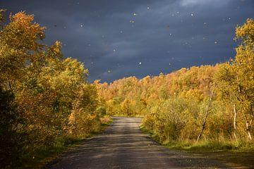 Herfst in een IJslands bos van Elisa Hanssen