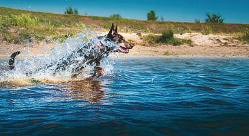 Ren door het water van Marinus Engbers