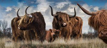 Panorama van Schotse Hooglanders van Bert Hooijer