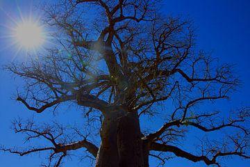 Baobab in middagzon van Marieke Funke
