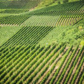 Lijnen in wijngaard van Studio  Milaan