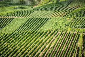Lijnen in wijngaard van