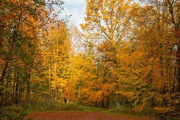 Bos in Herfstkleuren van Gert Hilbink