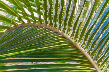 Palmblad van Tim van Breukelen