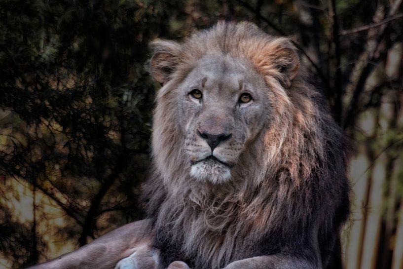 Big King van Joachim G. Pinkawa