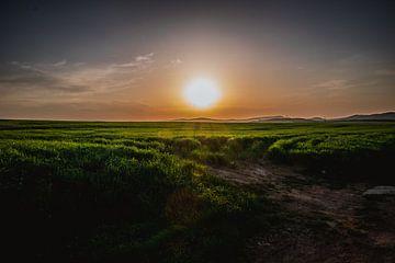 Sonnenstrahlen über dem grünen Gras von Stedom Fotografie