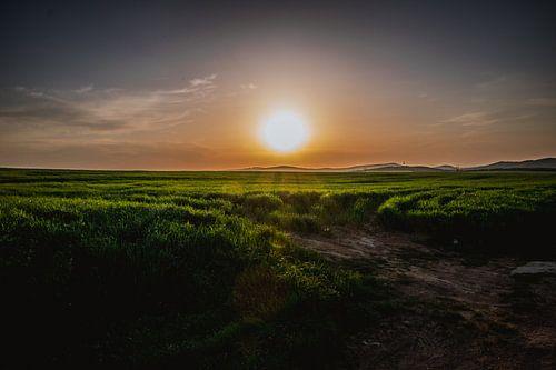 Zonnestralen over het groene gras
