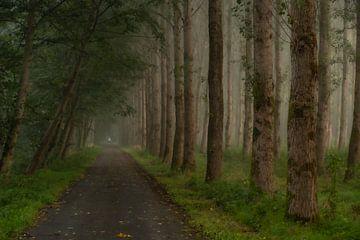 Een herfstochtend in het bos