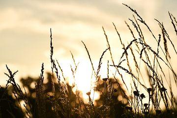 Veld met zonsondergang van Kashja Neels