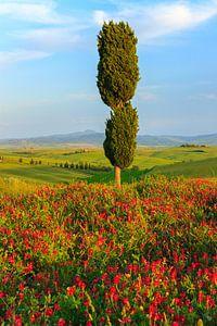 Val d'Orcia, Toscane, Italië