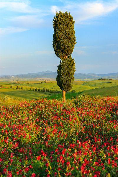 Val d'Orcia, Toscane, Italië van Henk Meijer Photography