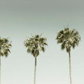 Vieille idylle des palmiers | Panorama sur Melanie Viola
