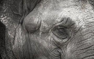 Elefant von Willem-Jan Brink