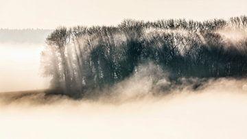 Nebelfelder von Rob Boon