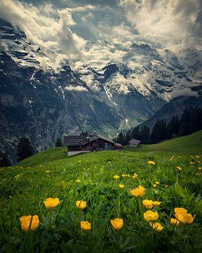 Schweizer Alpen von Niels Tichelaar
