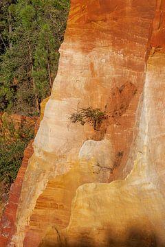 Boompje op okerkleurige rotswand van Dick Doorduin