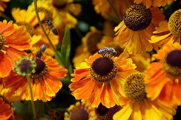 Gelborange mit Bienen besiedelt von wil spijker
