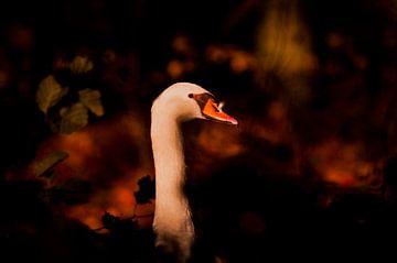 Porträt eines Schwans mit Herbstlaub von DayDreamZ