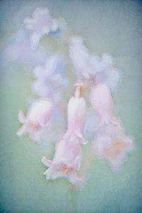 Hyacinten in pastel
