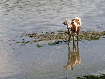 Koe in rivier van Sijmen van der Plicht