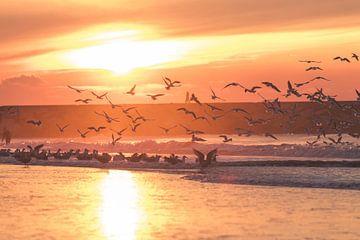 Meeuwen tegen zonsondergang bij het Havenhoofd Scheveningen van Anne Zwagers