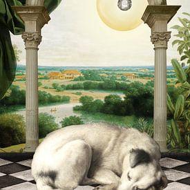 Dog, Asleep. van Marja van den Hurk