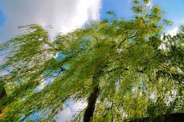 bomen lucht artistiek