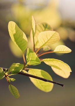 Prachtig verlicht groene bladeren in een bos van Tony Vingerhoets