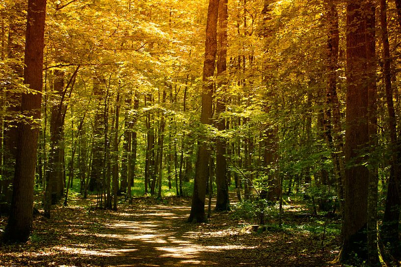 Bos in herfstkleuren van Yvonne Blokland