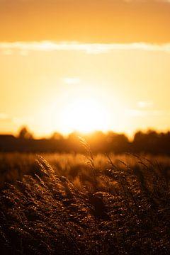 Zonsondergang op het platteland van Eline Huizenga