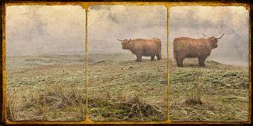 duinlandschap met Schotse Hooglanders van eric van der eijk